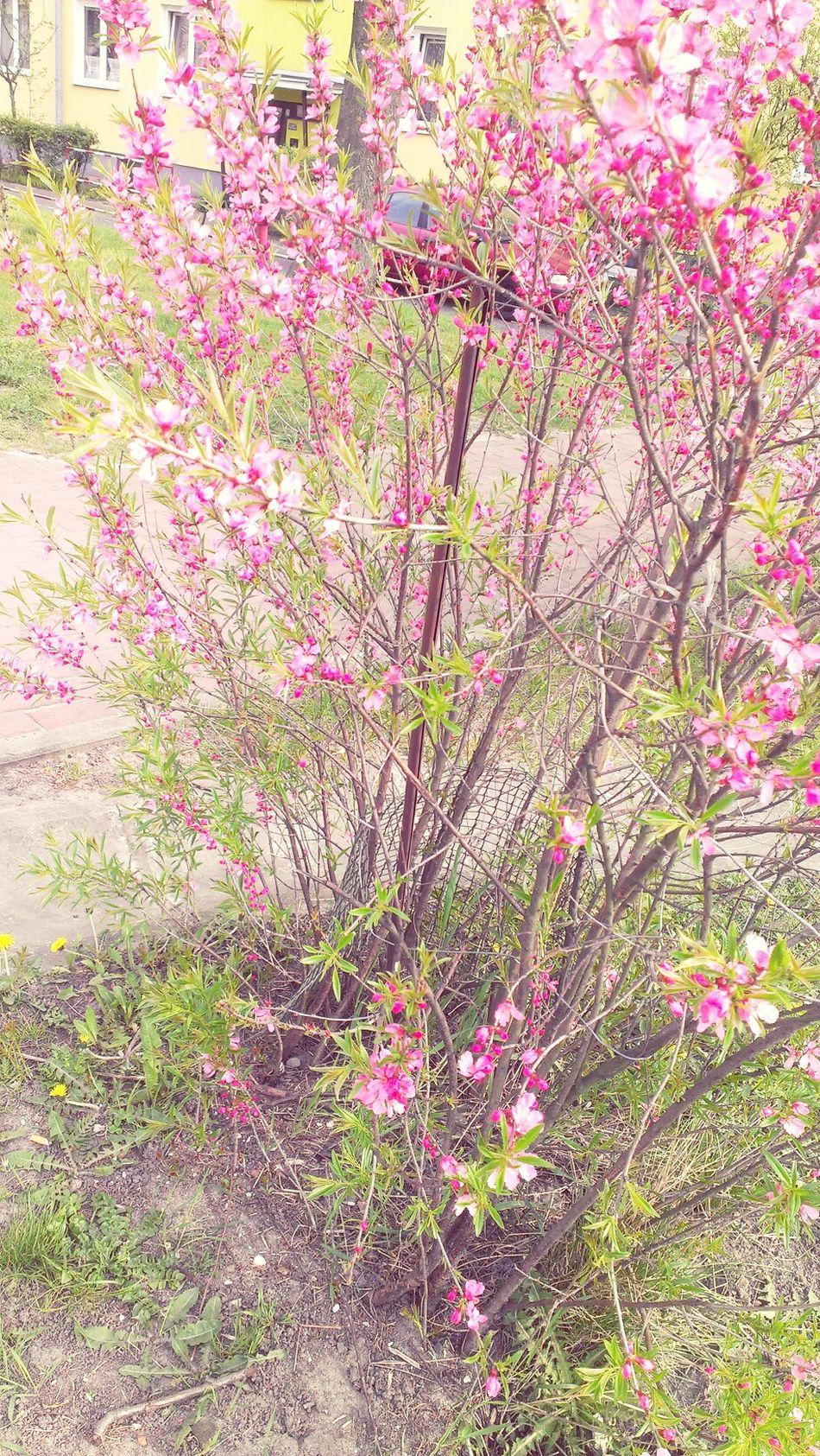 Kwiaty Takiepiekne