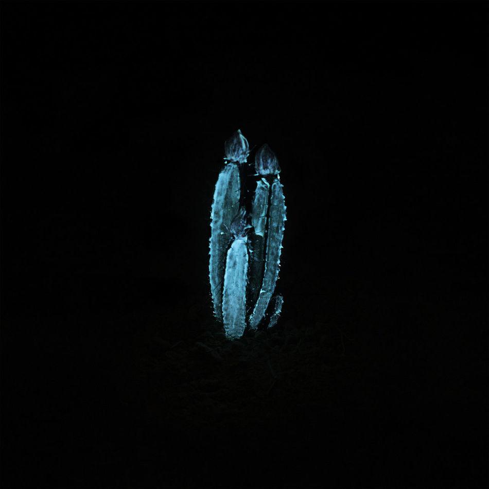 Art Black Background Blue Cactus Cactus Flower Cactusporn Close-up Flowers Night No People Phosphorescence