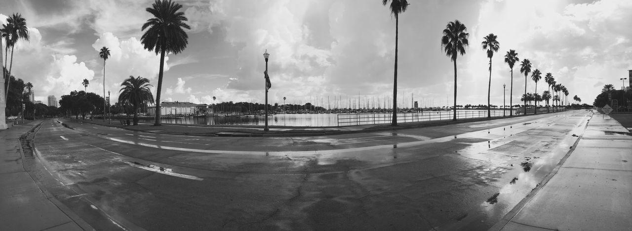 sky, palm tree, panoramic, cloud - sky, tree, outdoors, no people, day, city, nature