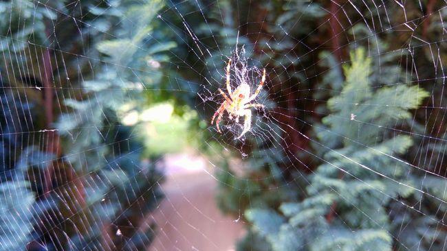 Itsy Bitsy Spider Web Design Spiderweb Spider