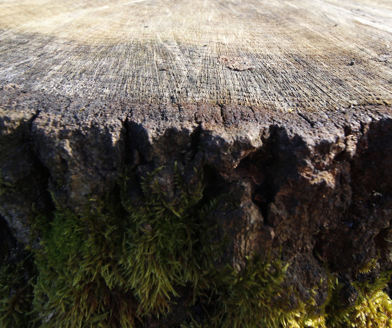 Old tree stump Bark Close-up Day High Angle View Moss Nature No People Outdoors Textured  Tree Tree Stump