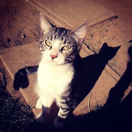 Cat Catlover Huguitoooo Amorporlosgatos Sexy Tierno Cute Hermoso Beautiful Guapo Gato Baby Miamor Bebe