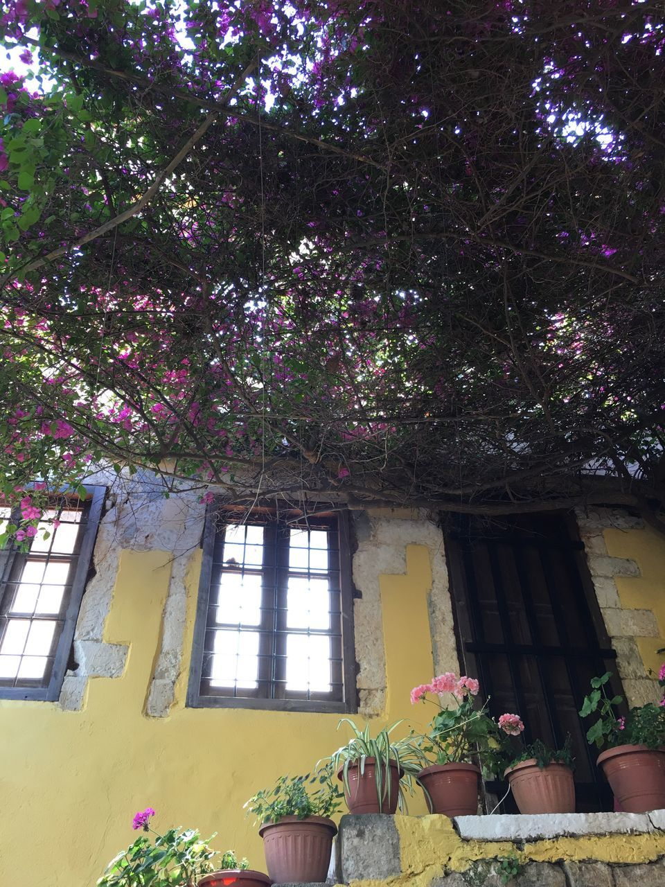 flower, tree, growth, built structure, architecture, no people, low angle view, plant, day, nature, blossom, building exterior, branch, window, fragility, outdoors, beauty in nature, freshness