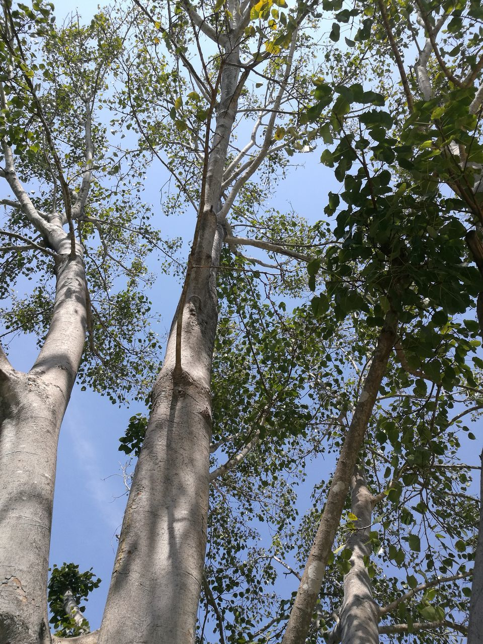 tree, tree trunk, low angle view, branch, growth, day, outdoors, nature, sky, beauty in nature, no people