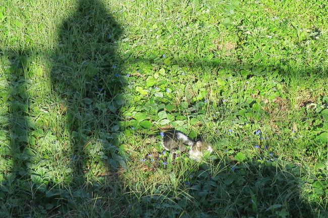 リベンジ!今朝は影から近付いてみた!! Green Color Grass Field Plant Nature Grassy Beauty In Nature Green Streetphotography Canon Powershot G9X No Edit/no Filter The Purist (no Edit, No Filter) Animal Themes Silhouette Silhouette_collection Silhouette Photography Cat Catlovers Light And Shadow Sunnyday☀️