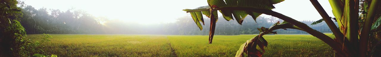 Panoramic View Of Grassy Field During Foggy Weather