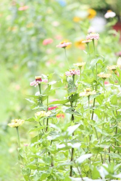 Flower Beauty In Nature Go Green Feel Green Botany Beauty In Nature Bestshot Nature Lover🌳🍃🍂🌿
