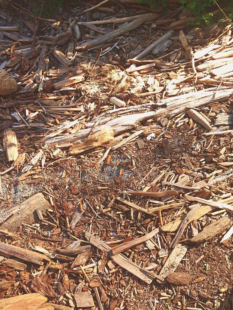 Just like drift wood, seas the day🤗 Driftwood @Gypsyculu Beautiful Beauty In Nature Bay Area HalfMoonBay