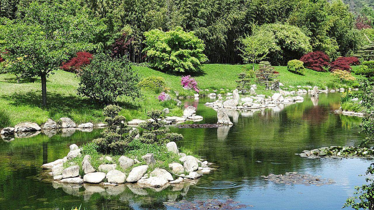A Moment Of Zen... Japanese  Garden Colorfull Showcase June Color Of Life