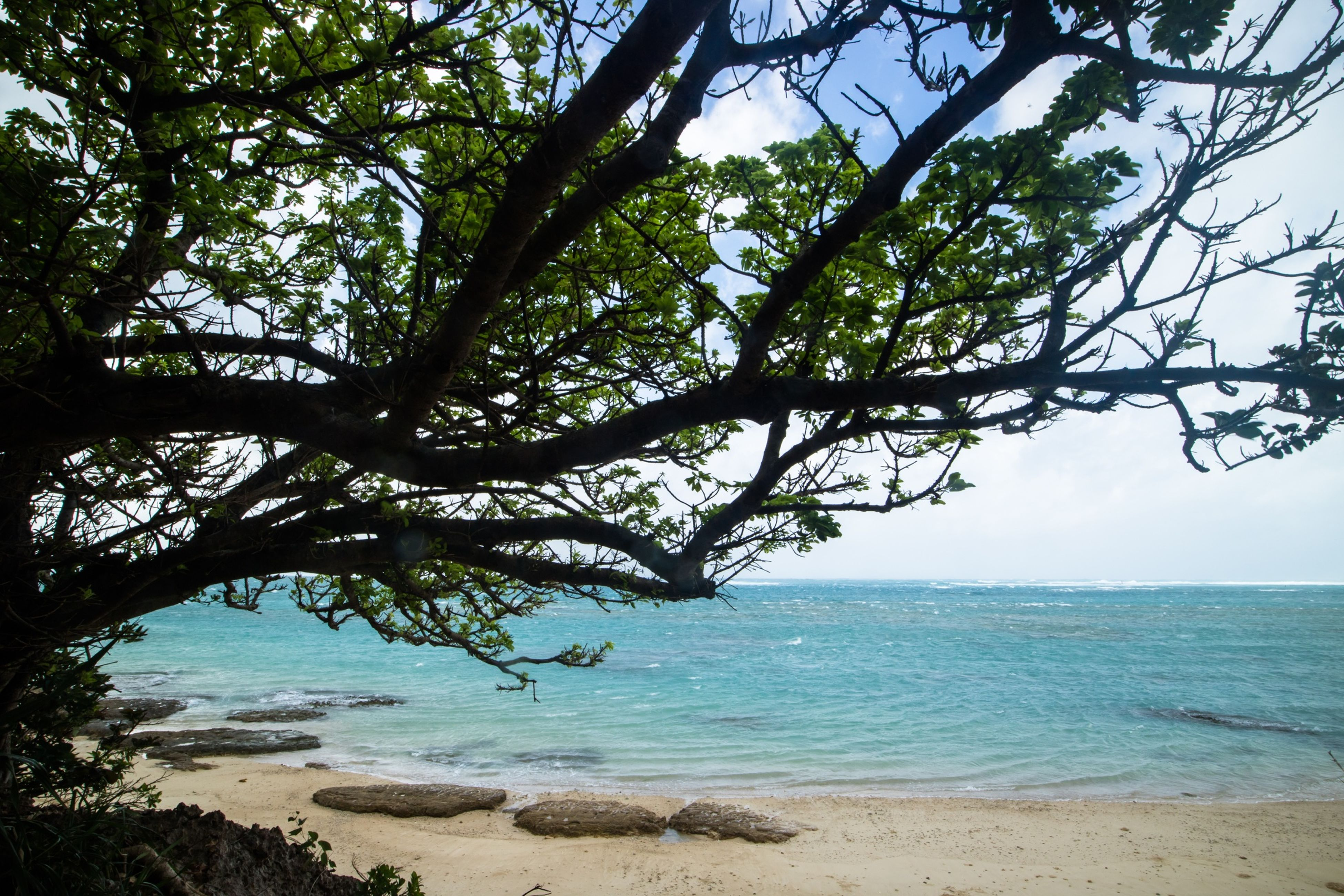 tree, sea, beach, tranquility, water, horizon over water, tranquil scene, scenics, beauty in nature, branch, nature, shore, sky, growth, sand, idyllic, tree trunk, day, outdoors, remote