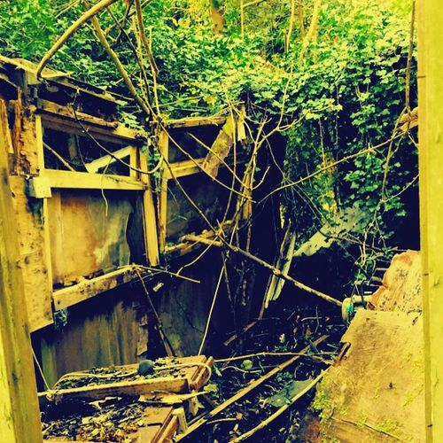 What things you can find out doors Abandonsheds Abandon Creepy Overgrown Derilict Messy