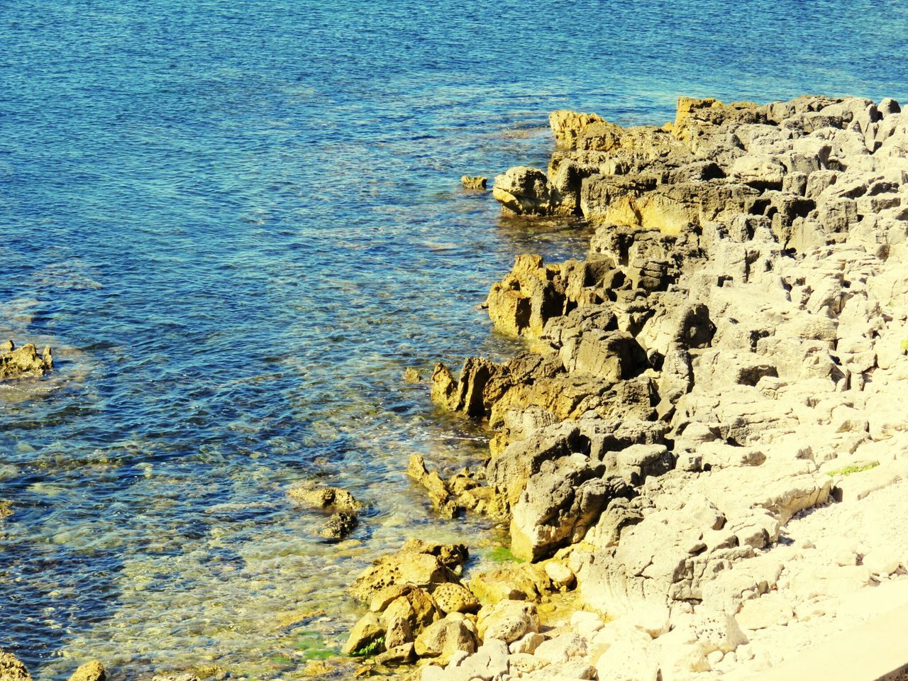 sea, rock - object, no people, water, nature, high angle view, day, animals in the wild, outdoors, animal themes, beauty in nature, close-up