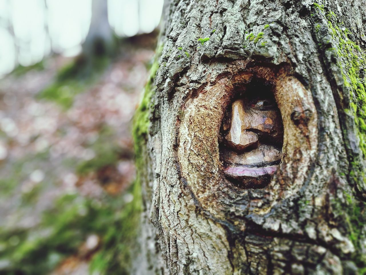 Close-up Portrait Outdoors Tree Nature No People Ghost Woodcarving Woodcut Baumgeist Peeking Through Peeking HuaweiP9Photography Huaweiphotography Filters