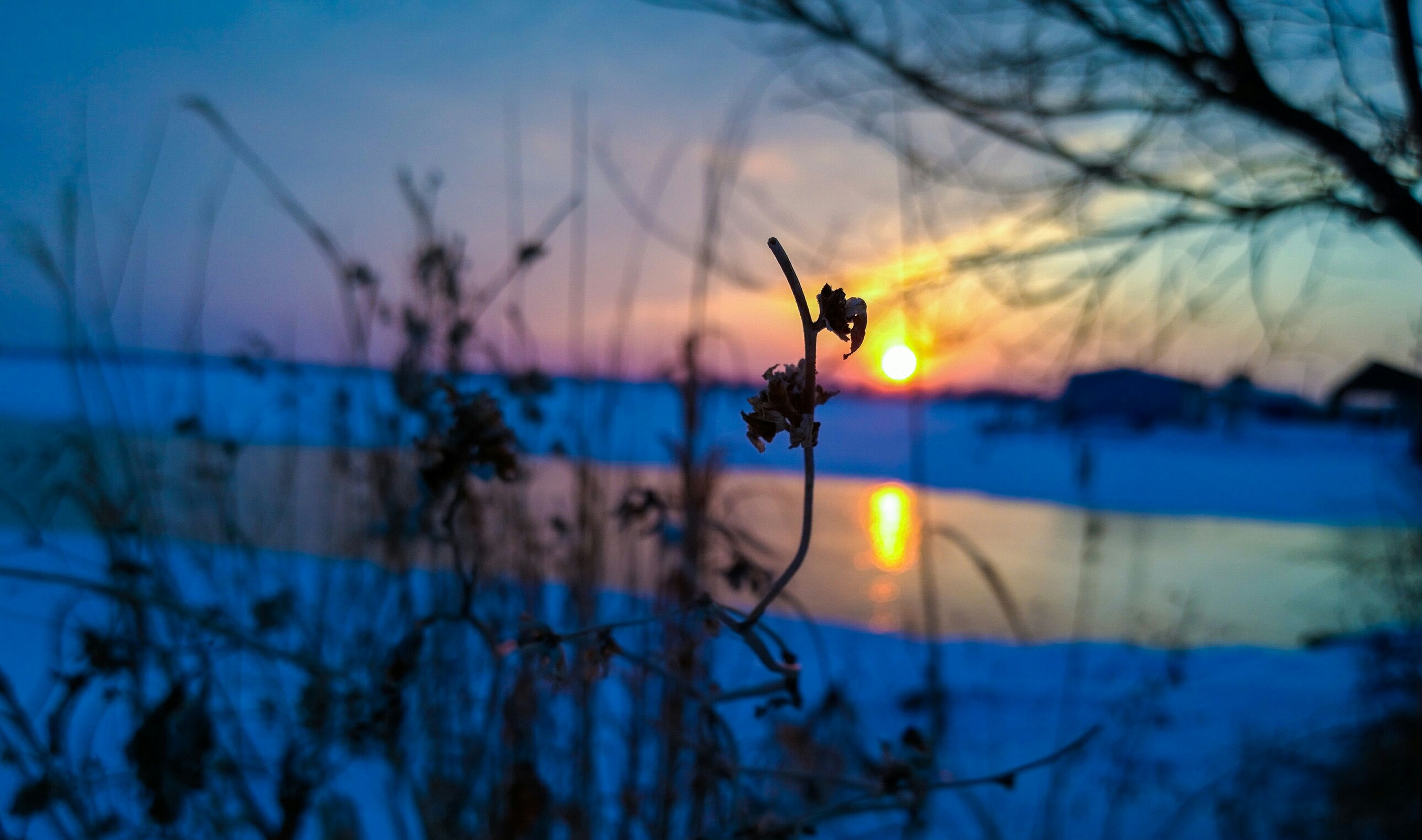 sunset, focus on foreground, silhouette, nature, sky, selective focus, beauty in nature, orange color, plant, tranquility, close-up, sun, dusk, branch, stem, outdoors, tranquil scene, scenics, no people, water