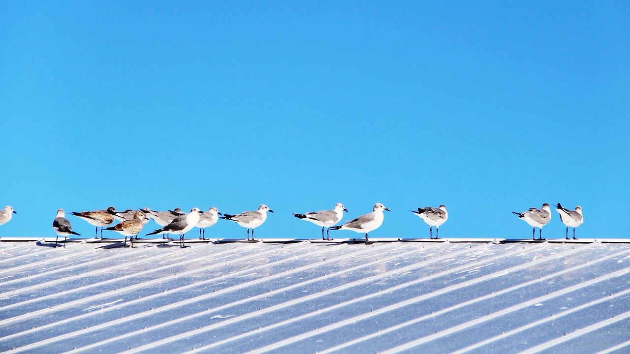 Seagulls in line. At The Beach Segulls Bahamas About Today Negative Space