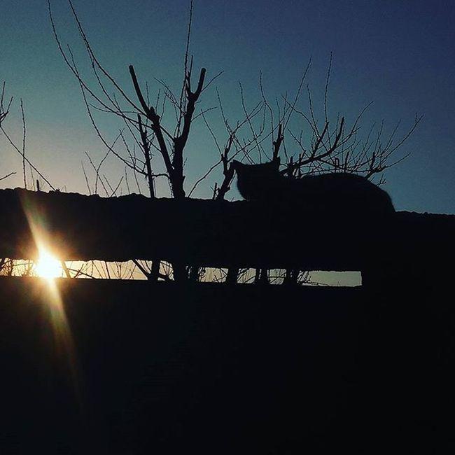Billi Billi Billi Billi Billi Billi Billi Billi Billi Billi Billi Billi F4F L_4_L Swag Sunset Colourful Sunset LOL Follow Followshoutoutlikecomment Tagsforlikes Followall Fabulous tagsforlikes tagsforlikes followforfollow followshoutoutlikecommentBaasuphotogallery