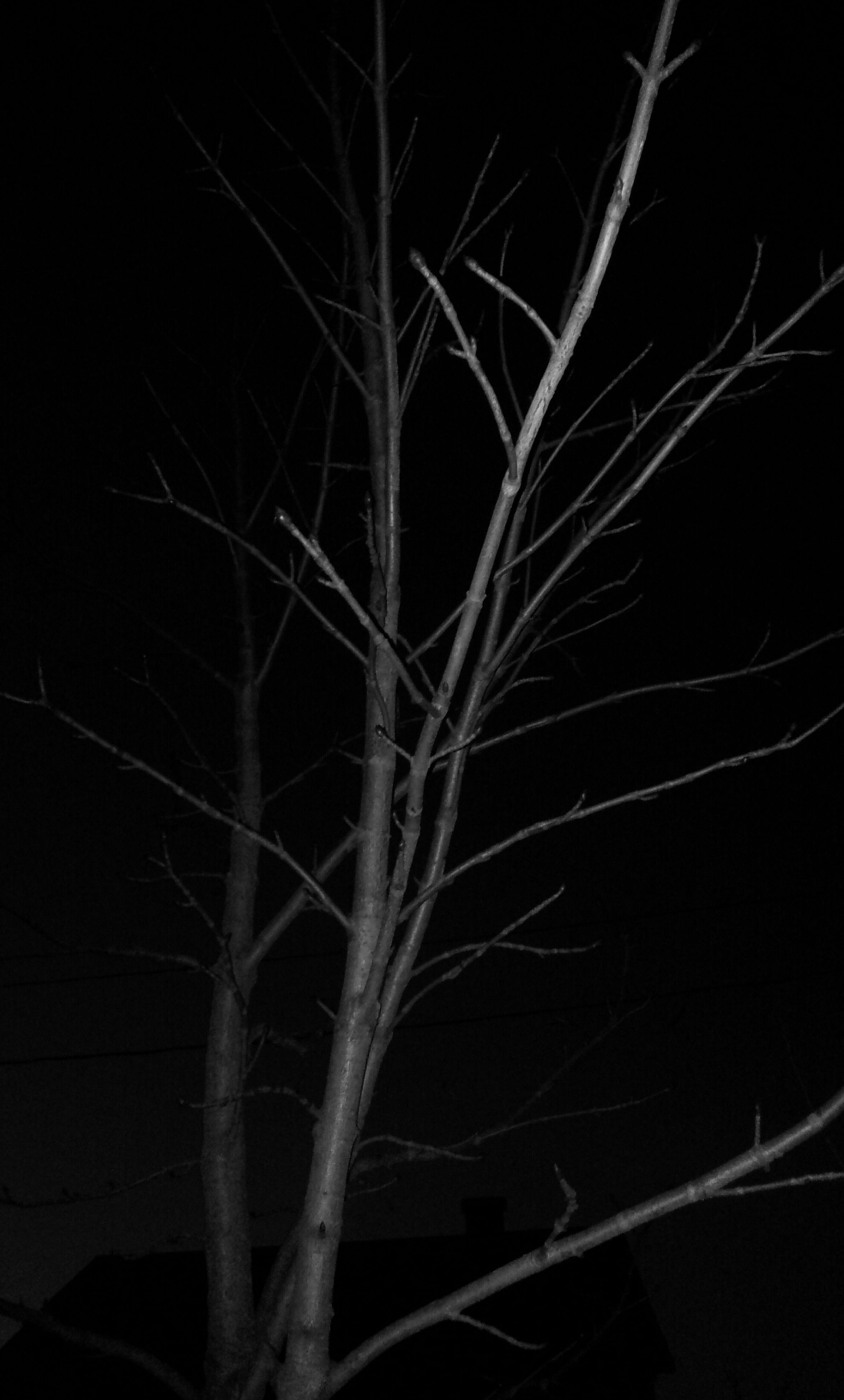 night, branch, bare tree, nature, growth, dark, tranquility, plant, beauty in nature, silhouette, close-up, low angle view, outdoors, clear sky, tree, no people, twig, copy space, black background, moon