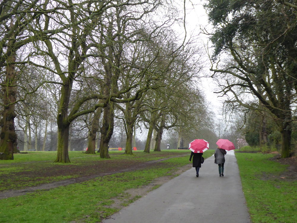 Bare Tree Casual Clothing EyeEm LOST IN London Friendship Grass Kensington Gardens London Park London Weather  Nature Outdoors Rear View Red Umbrellas The Way Forward Togetherness Tree Two Ladies Under Umbrellas Typical London Weather Walking Walking In Park
