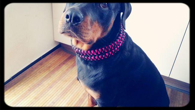Lucys neues Halsband.