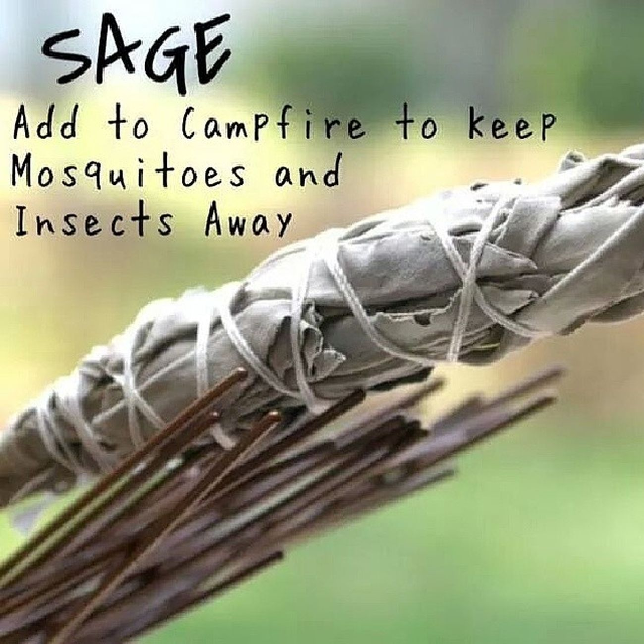 Camping Campingideas Sage Naturalherb healing spiritual naturalremedy mosquitos insects repellant goodidea