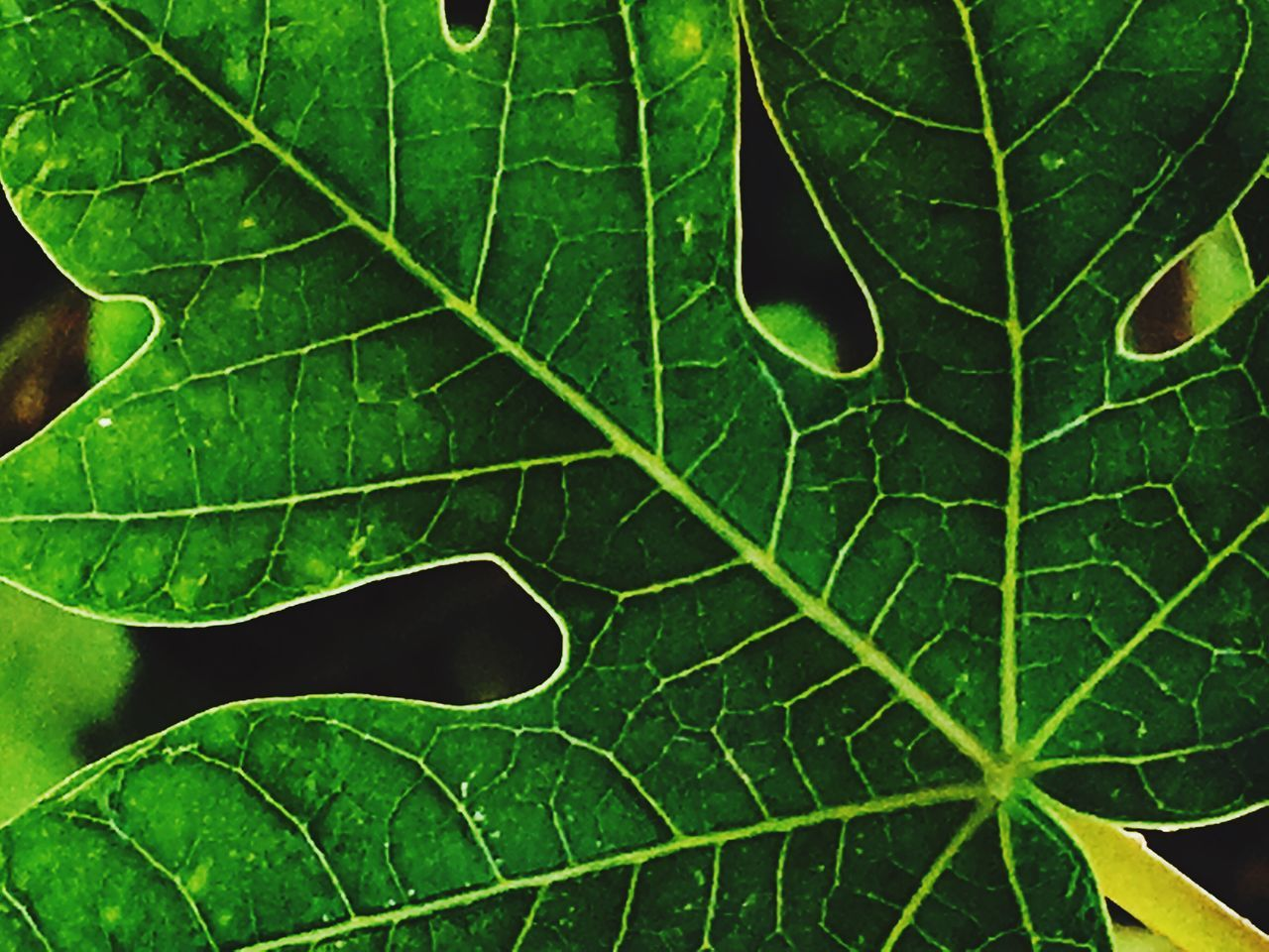 leaf, green color, growth, nature, no people, full frame, plant, day, close-up, backgrounds, outdoors, freshness, beauty in nature, fragility