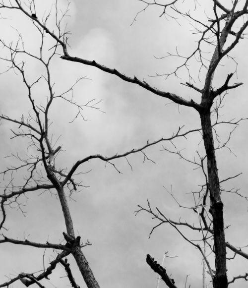 #Dry #EyeEm Nature Lover #eyeemindonesia Blackandwhite Bw_collection Bwphotography Day Eye4photography  EyeEm Gallery Monochrome Nature Outdoors Sky Tree