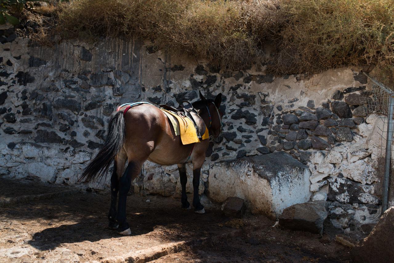 Animal Themes Brown Day Domestic Animals Full Length Greece Hoofed Mammal Horse Livestock Mammal Mule No People One Animal Outdoors Santorini Santorini, Greece