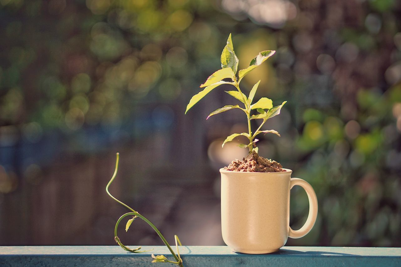 Plant Growth Leaf Fragility Nature Day Close-up No People Flower Freshness Outdoor Positive Thinking Vintage Bokeh Morning Take A Break