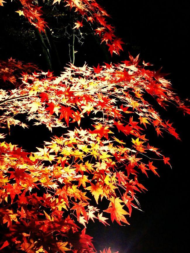 紅葉 Relaxing