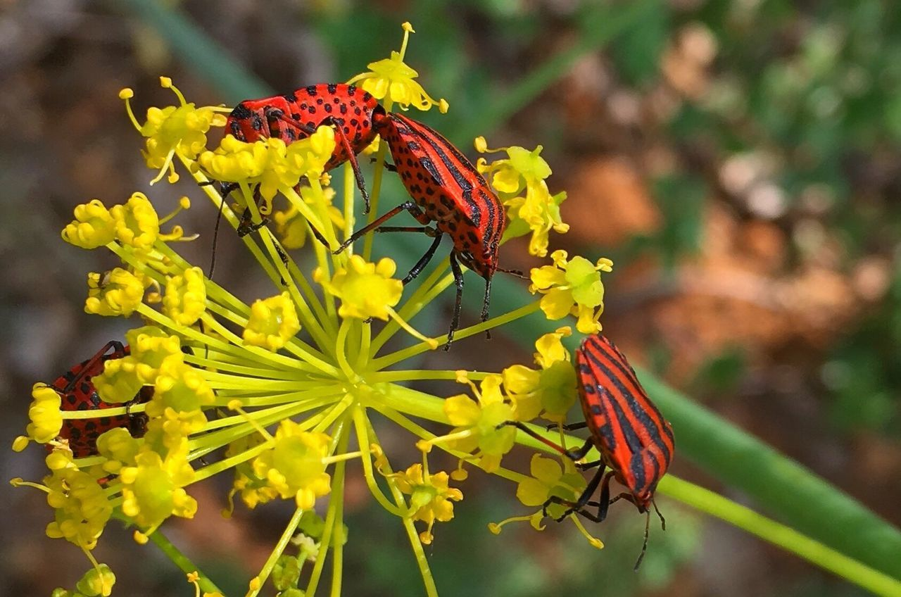 Rural Animal Wildlife Insect Flower Plant Nature Beauty In Nature Yellow Photooftheday Naturaleza Nature Photography Countryside SPAIN España