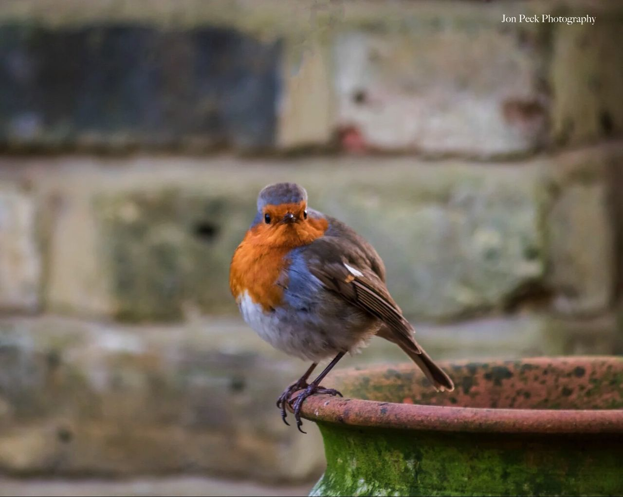 one animal, animal themes, bird, focus on foreground, animals in the wild, perching, robin, animal wildlife, no people, day, close-up, outdoors, nature