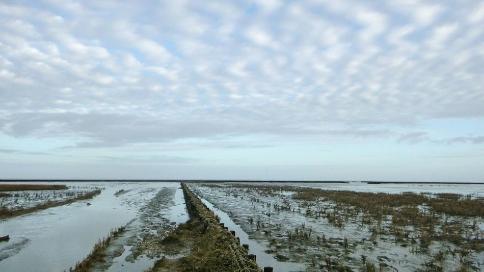 Nature Water Salt - Mineral Landscape Outdoors Rural Scene Sky Beach Sea Cloud - Sky Agriculture Sand No People Beauty In Nature Day Waddenzee Groningen Holland Holland Marram Grass Beauty In Nature Reflection Horizon Over Water Wetland Nature EyeEm Nature Lover