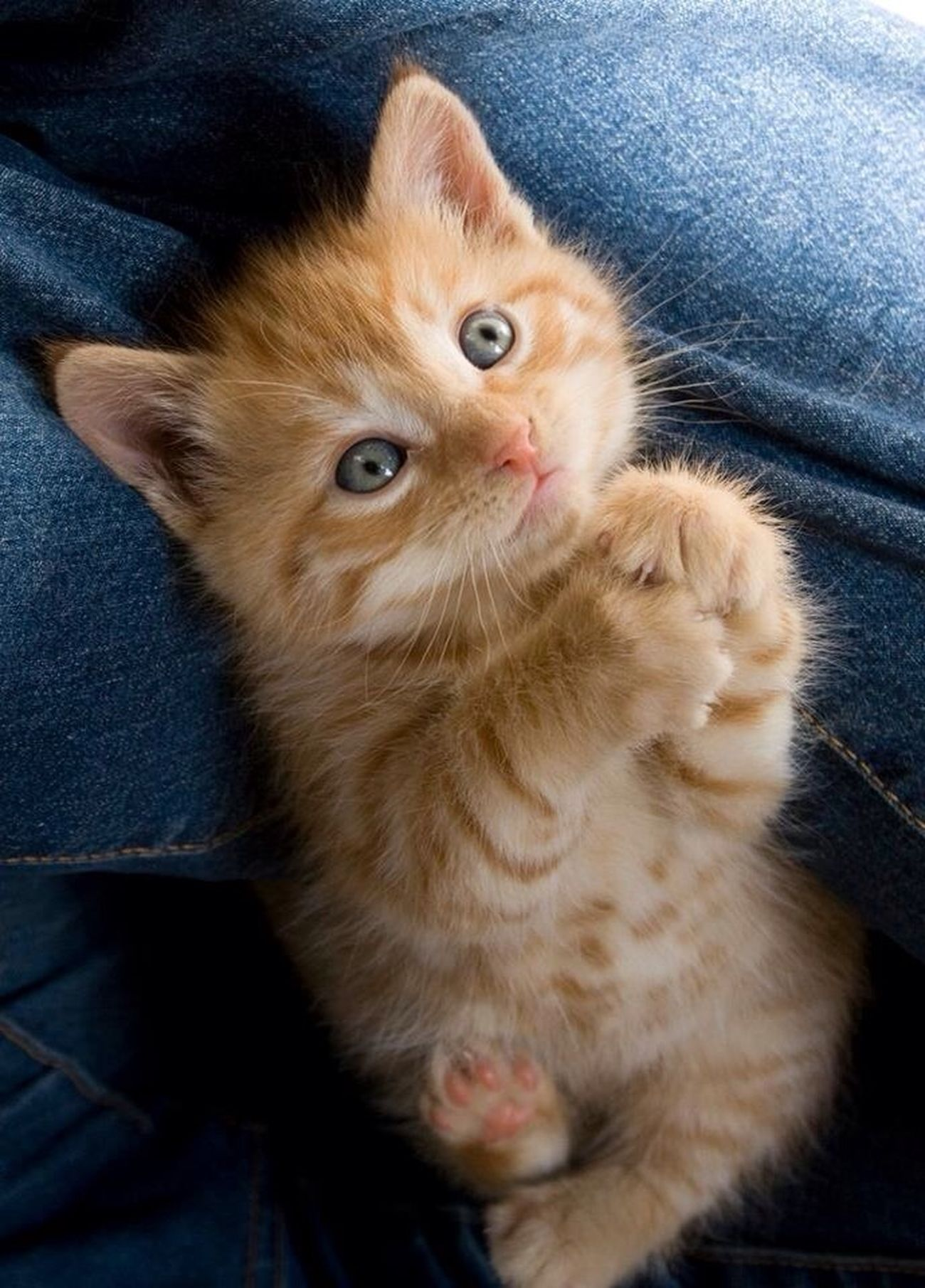 I Cant Get Over How Cute This Kitty Is Lol