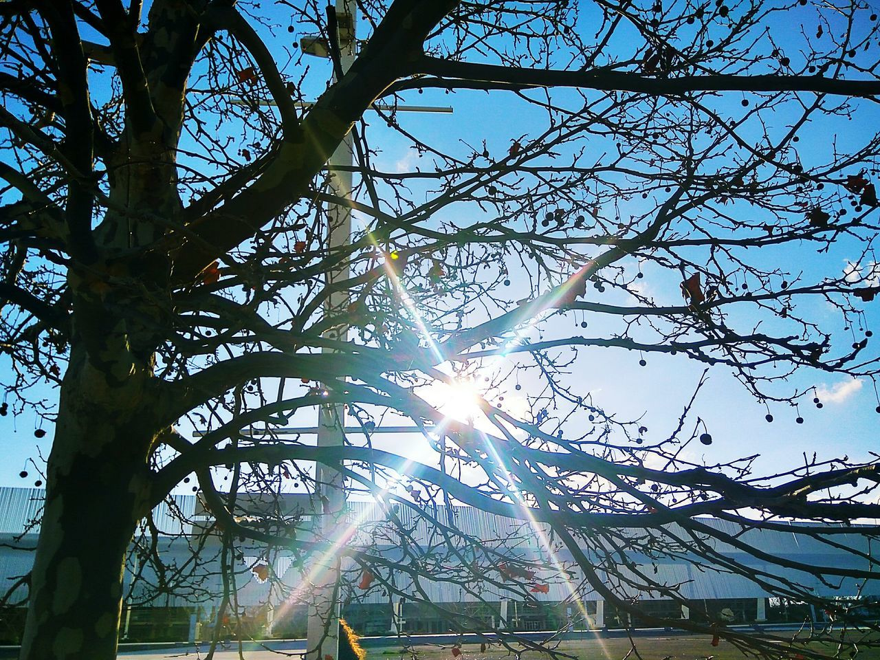 sunbeam, lens flare, sun, sunlight, tree, low angle view, sky, nature, day, outdoors, branch, growth, built structure, no people, beauty in nature