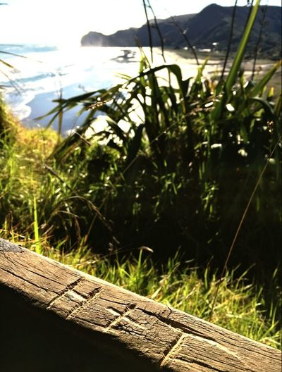 Piha beach New Zealand Travel Photography Wanderlust Feel The Journey Newzealand