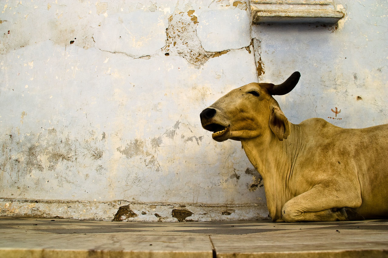 one animal, animal themes, mammal, day, no people, domestic animals, outdoors, architecture, close-up