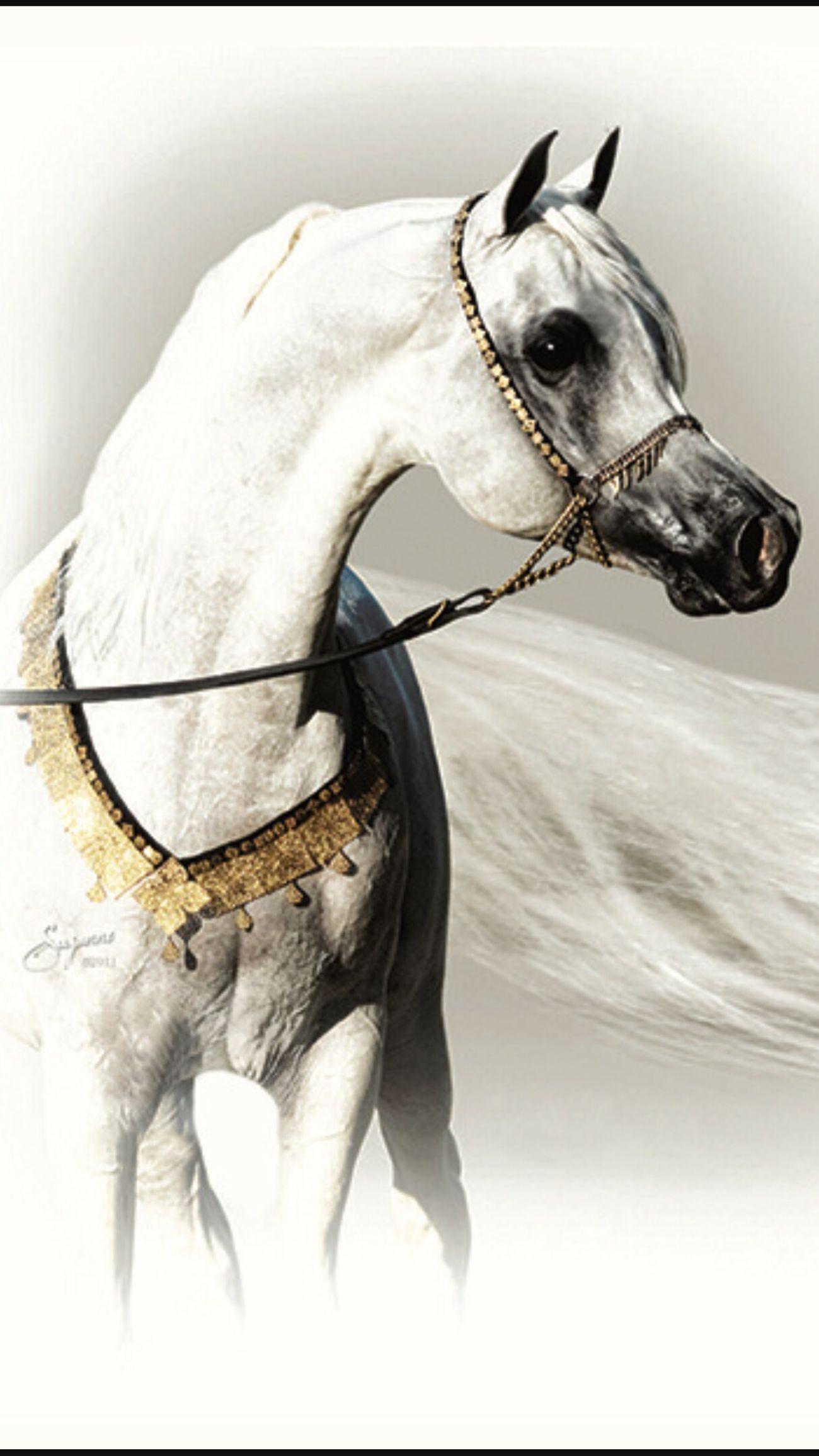Purebred Arabian Horses are baeeee 😍😍😍😍😍😍😍😍 Art Enjoying Life