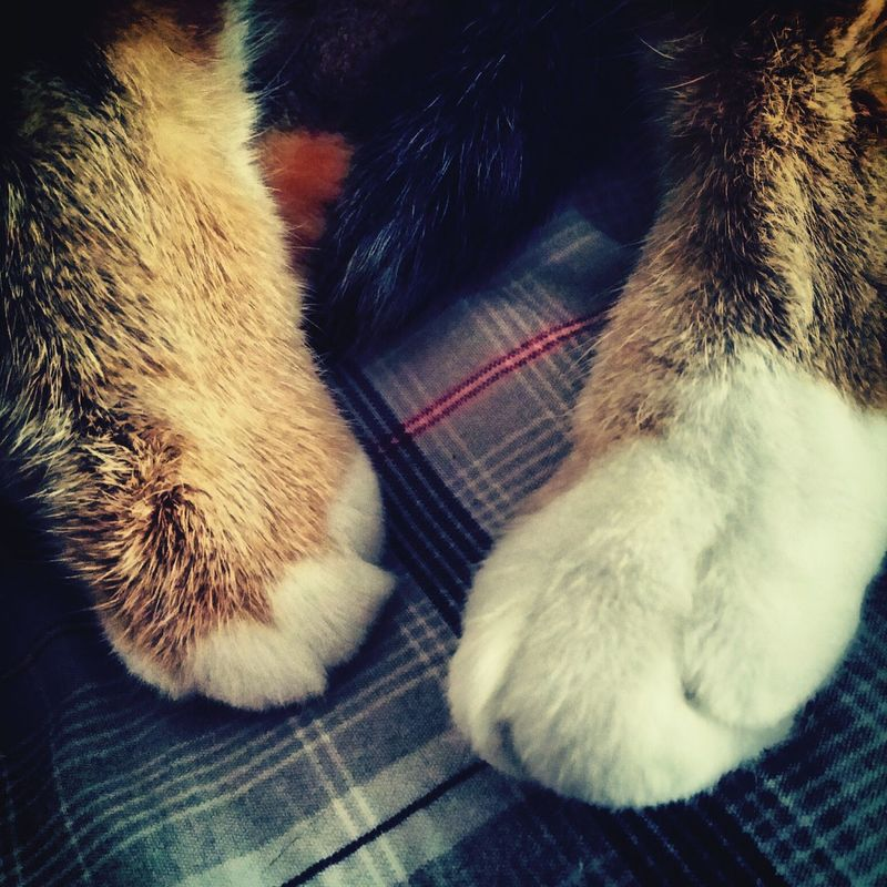 I love waking up to kitty paws. Cat Lovers Pets White Orange
