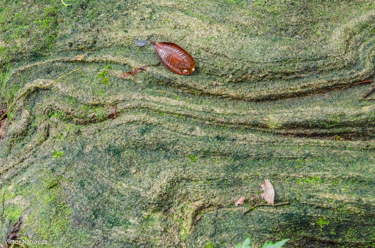 Nature Green Color Beauty In Nature Nature Plant Documentary Fotodocumental Documentaryphotography Victornatureza Vitaonatureza Artefotografia Photoart Fotografiaautoral Brasil Travel Destinations Paraty Brazil Textura