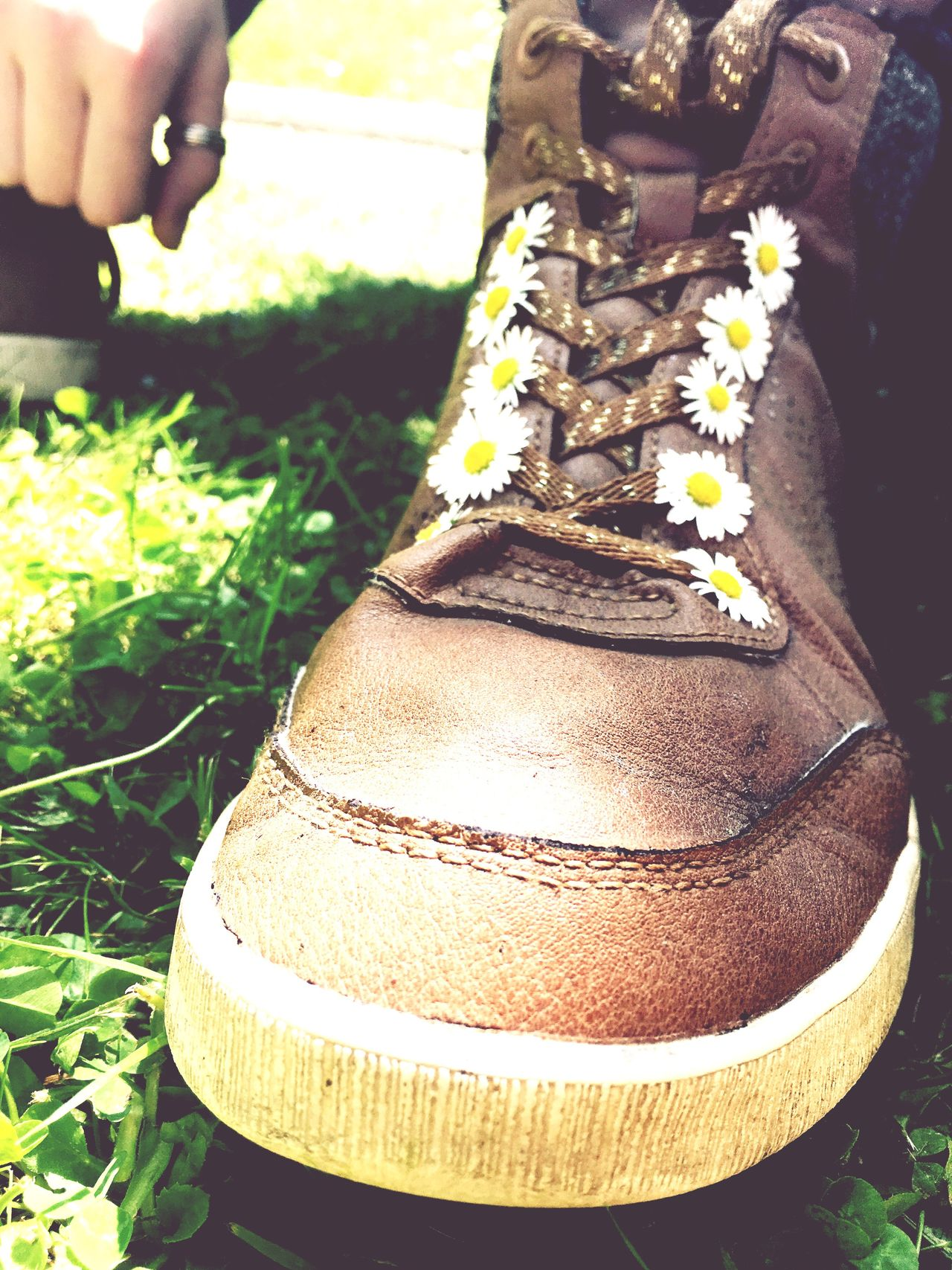 Chaussure Fleurs Flowers Paquerette Paquerettes Daisy Daysies Shoe Brownshoes Littleflower Littleflowers Vintage Photo Vintage Peace