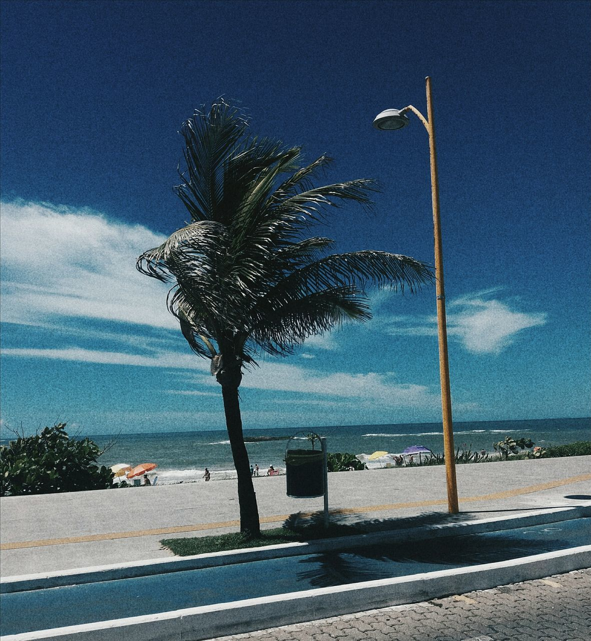 palm tree, sea, tree, sky, water, road, beach, day, cloud - sky, nature, beauty in nature, scenics, horizon over water, no people, growth, outdoors, blue