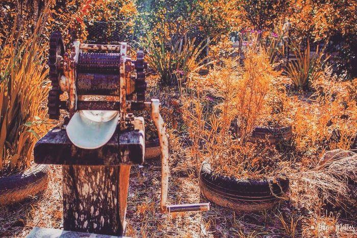 Sítio da vovó Day Nature Cañadeazucar Jardin VelhosTempos First Eyeem Photo