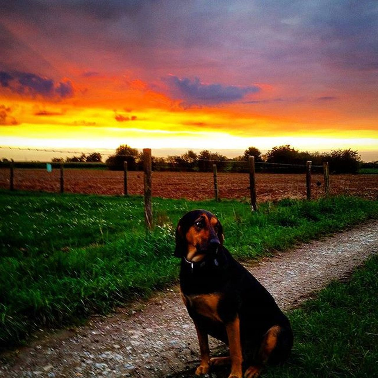 Hund Sonnenuntergang Skyisburning Sky