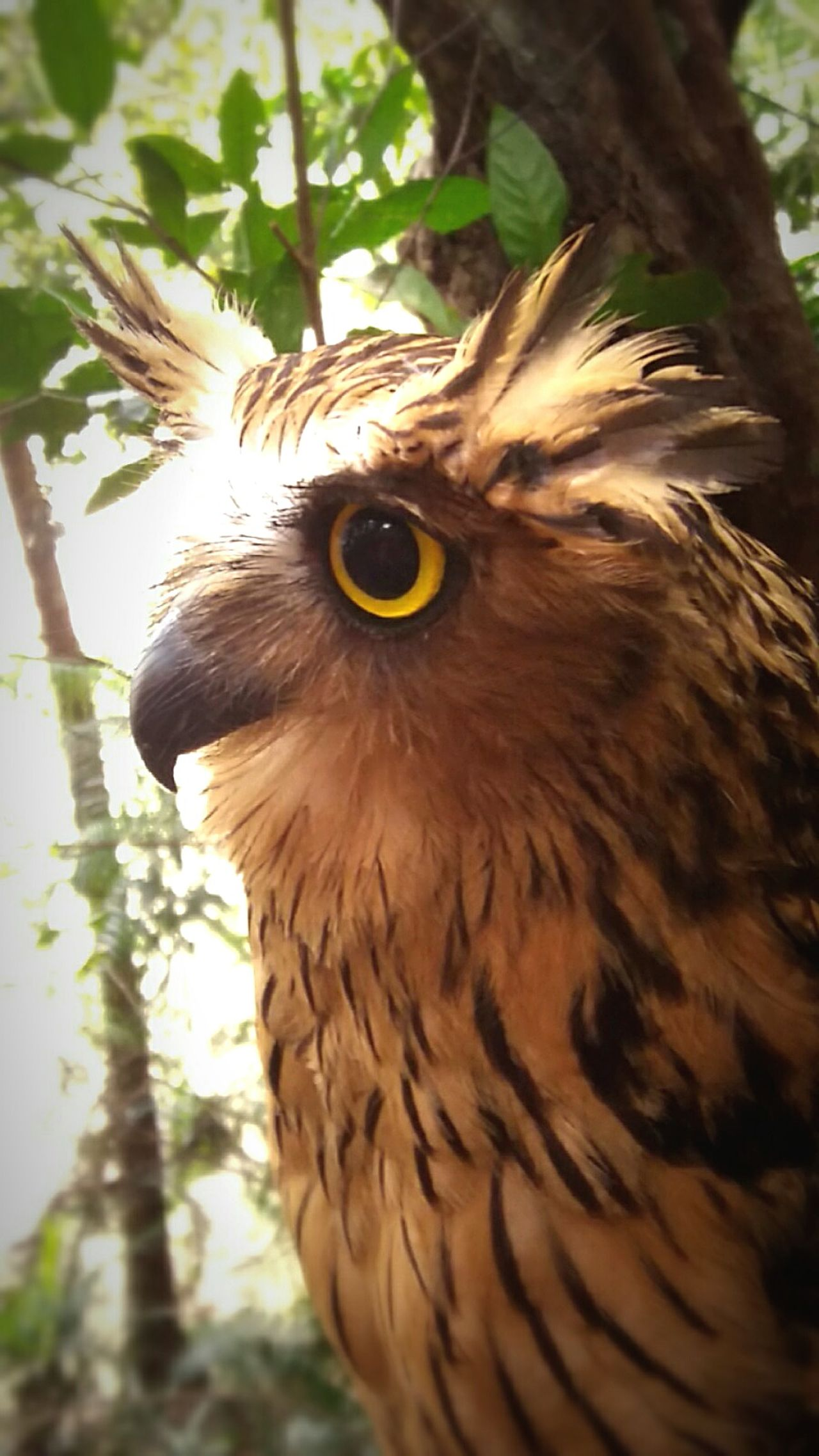 Owl Owl Photography Owls💕 Owl Eyes One Animal Tree Eye Animal Themes Bird Nature No People Outdoors Day Close-upEyeEm Gallery Animals In The Wild Beauty In Nature EyeEm Nature Lover