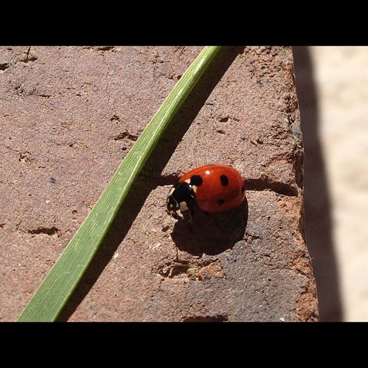 day, no people, animals in the wild, wildlife, ladybug, one animal, animal themes, insect, tiny, outdoors, close-up, nature