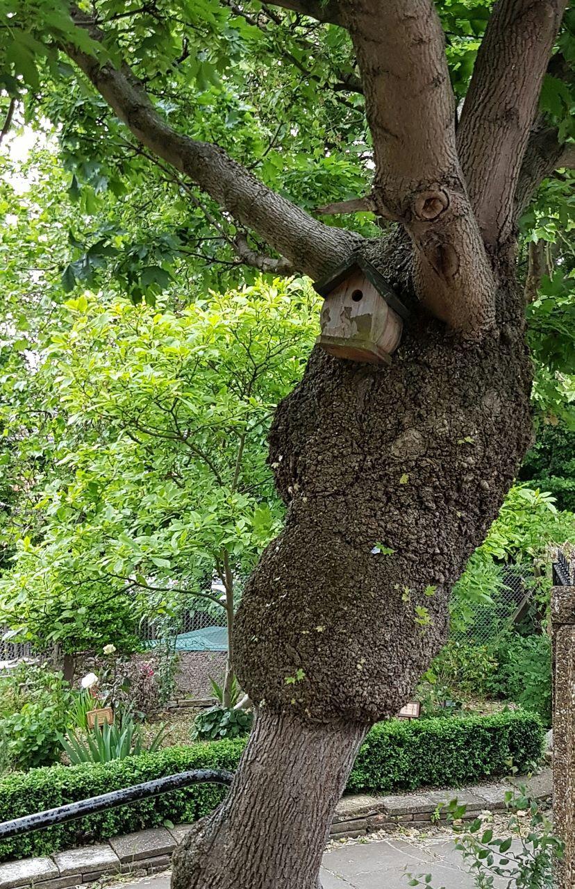 tree, tree trunk, one animal, nature, animal themes, animals in the wild, mammal, branch, animal wildlife, no people, outdoors, climbing, growth, day, koala
