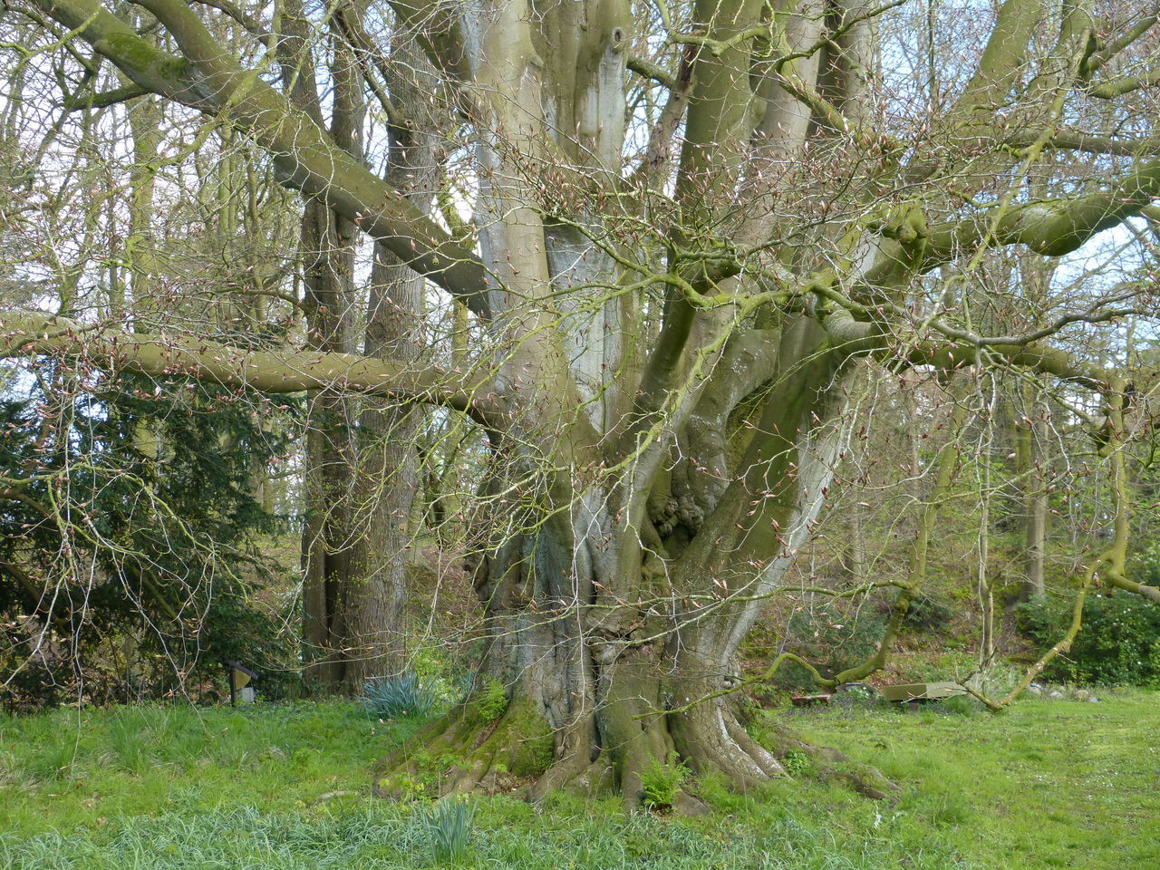 Old tree in Ostfriesland ... :-) Beauty In Nature Day Gardner Growth Nature Nature Nature Photography No People Old Tree Old Trees Ostfriesland Ostfriesland Landschaft Outdoors Park Spring Spring Tree Springtime Tranquility Tree Tree Tree Area Tree_collection  Tree Photography Trees Wild Nature