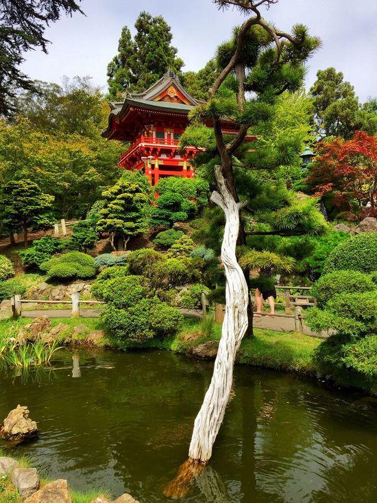 San Francisco Japanese Garden San Francisco Golden Gate Park Golden Gate Park California Summer Garden Nature