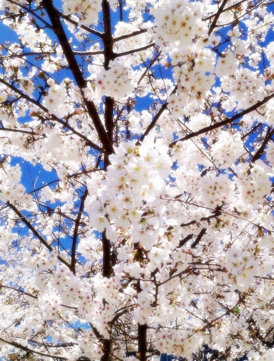 Trees Spring Beautiful Nature I Love Nature!