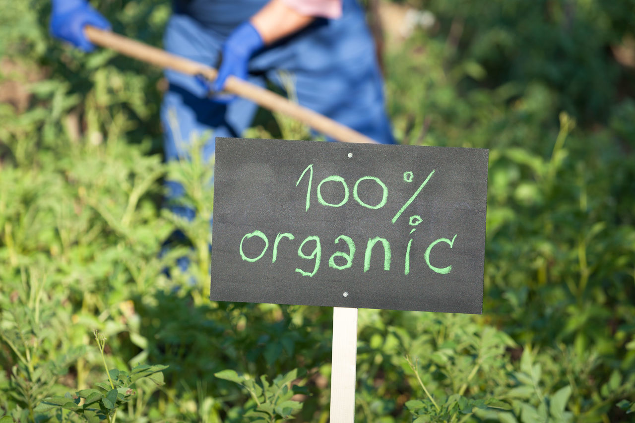 Farmer working in the non-genetically modified vegetable garden Agriculture Certified Environmental Farmer Gardening Natural Nature Production Working Certification Control Ecological Farming Food Garden Genetic Healthy Non-genetically Non-gmo Organic Organically Safe Soil Vegetable